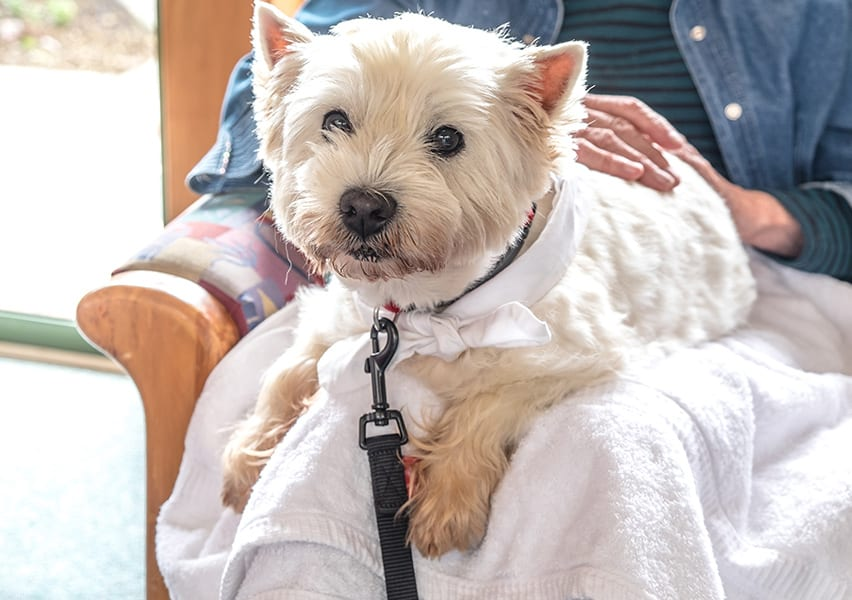 A resident's small pet dog sits on her lap looking into the camera while getting attention from their owner.